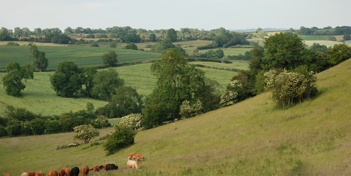 Our beautiful Cotswold view seen from the farm